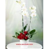7 Kırmızı Gül ile Çift Dal Orkide