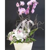 Çift Dal Renkli Orkide 3