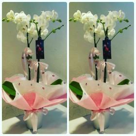 Çift Dal Beyaz Orkide 3